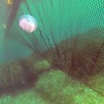 barrage anti-méduse / flottant / pour eau calme