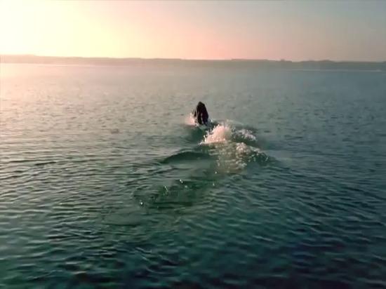 Planche de surf de betriebene d'elektrisch de neue de DAS - planche de surf électrique Waterwolf MPX-3