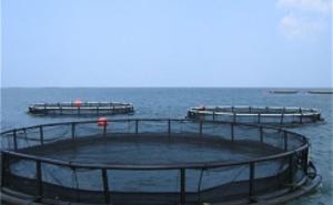 Bassins, cages flottantes et viviers