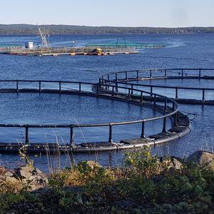 cage à poissons pour la pisciculture