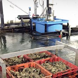 vivier d'élevage pour l'aquaculture