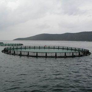 cage à poissons pour l'aquaculture / en PEHD / flottante