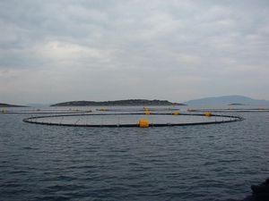 cage à poissons pour l'élevage de thons / pour l'aquaculture / flottante