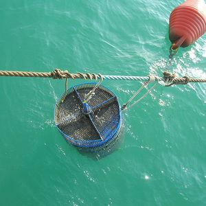bac d'élevage pour l'aquaculture