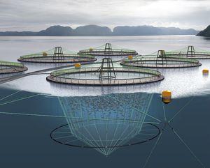 filet pour l'aquaculture